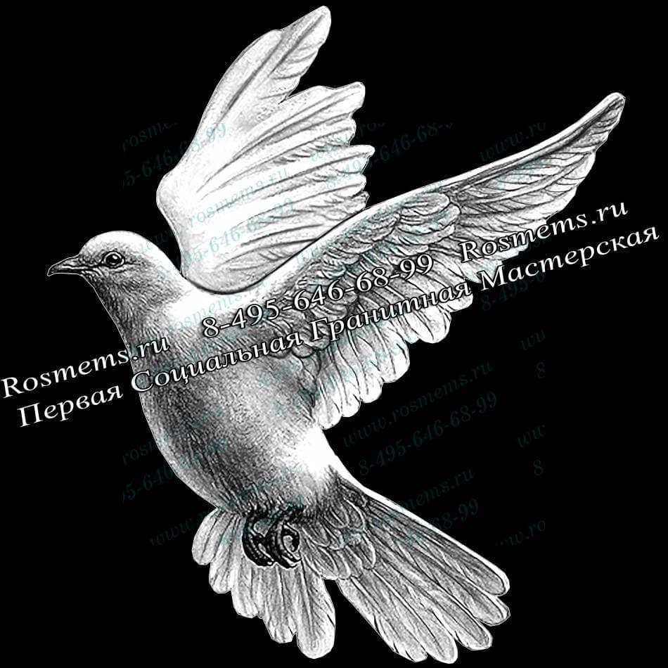 Рисунки на памятниках голубей